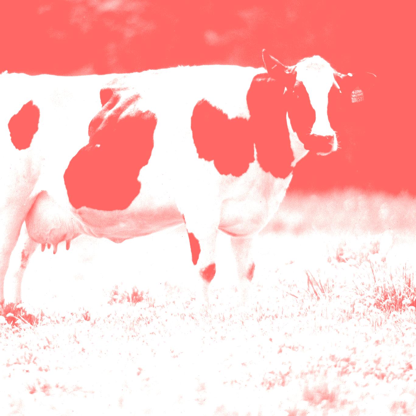 Hablemos de vacas