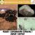 T12E03. Exploración espacial | Radar | Rutilo
